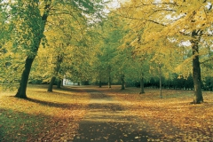 The main drive in autum