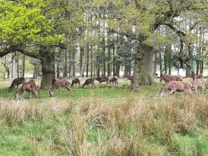 photo of The Normanby herd