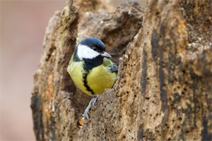 Photograph of a bird on a tree stump, taken at Normanby Hall